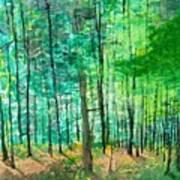 Dolly Sods Trees Art Print