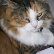 Dolly The Grumpy Cat Art Print