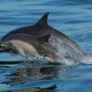 Dolphin Baby Flight Art Print