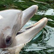 Dolphin Charm Art Print