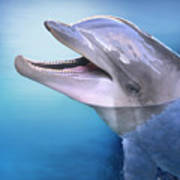 Dolphin In The Moonlight Art Print