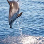 Dolphin Jump Art Print