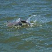 Dolphin Race Art Print