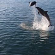 Dolphin Watch Art Print