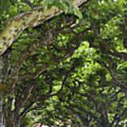 Dome Of Trees Art Print
