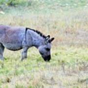 Donkey 005 Art Print