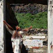 Donkey At The Window Art Print