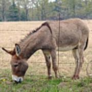 Donkey Finds Greener Grass Art Print