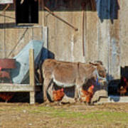 Donkey Goat And Chickens Art Print