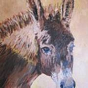 Donkey In The Sunlight Art Print