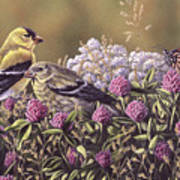Don't Bug Us - Goldfinches Monarch Butterfly Art Print