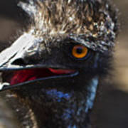 Dont Mess With The Emu Art Print