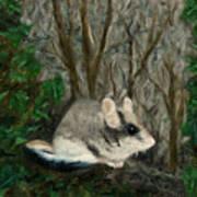 Dormouse In Ivy Art Print