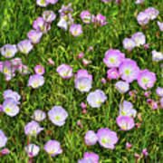 Dotted Meadow Art Print