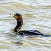 Double-breasted Cormorant Art Print