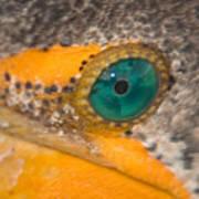 Double-crested Cormorant's Emerald Eye Art Print