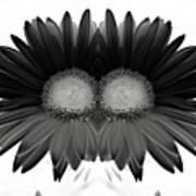 Double Daisy Noir Art Print