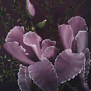 Double Iris Art Print