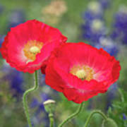 Double Take-two Red Poppies. Art Print