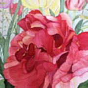 Double Tulip Art Print