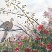 Dove And Roses Art Print
