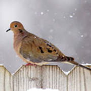 Dove In The Snow Art Print