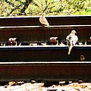 Doves On The Tracks Art Print