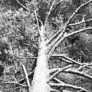Down Tree Art Print