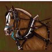Draft Horse Art Print