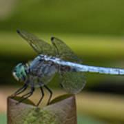 Dragonfly 14 Art Print