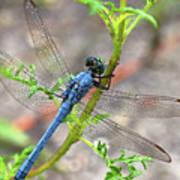 Dragonfly Delight Art Print