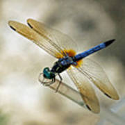 Dragonfly Dreams Art Print