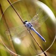 Dragonfly In A Bubble Art Print