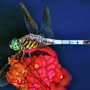 Dragonfly On A Pitcher Plant 009 Art Print