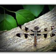 Dragonfly On Log Art Print