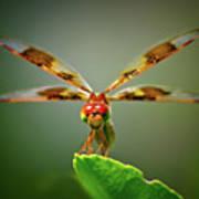 Dragonfly Pitstop Art Print