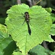 Dragonfly Resting Art Print