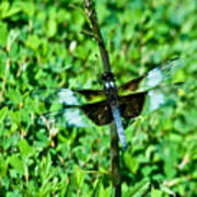 Dragonfly Resting On Stem Art Print