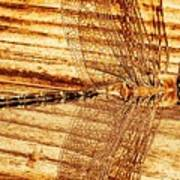 Dragonfly Sepia Art Print