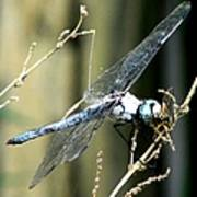 Dragonfly With Yellowjacket 1 Art Print