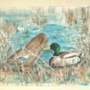 Drake and Hen Art Print