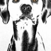 Drawing Of A Dalmatian Dog Art Print