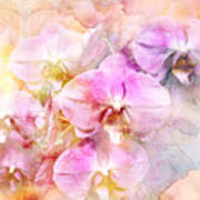 Dreaming Of Orchids Art Print
