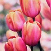 Dreaming Tulips Art Print