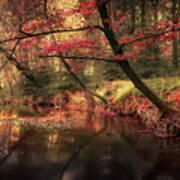 Dreamy Autumn Forest Art Print