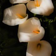 Dreamy Lilies Art Print