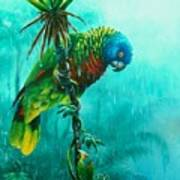 Drenched - St. Lucia Parrot Art Print