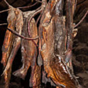 Dried Fish Art Print