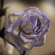 Dried Rose In Sienna And Ultra Violet Art Print