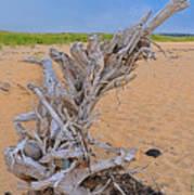 Drift Wood On The Beach Art Print